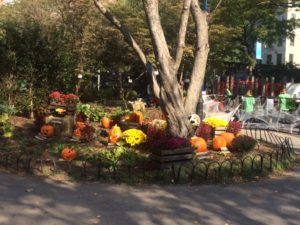 our garden pumpkin patch, showcasing many of the carving contest participants!