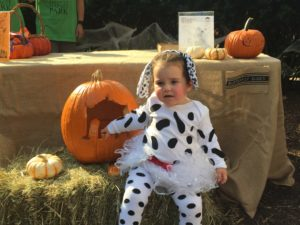 dalmation doing a little pumpkin carving